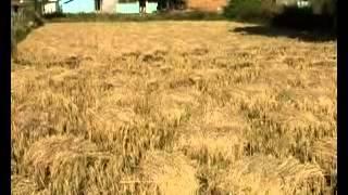 Chhattisgarh Rice Crop Former Work in his form dhan ka katora