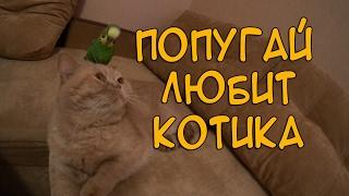 ПОПУГАЙ ЛЮБИТ КОТИКА!Смешные животные.Кот и попугай.