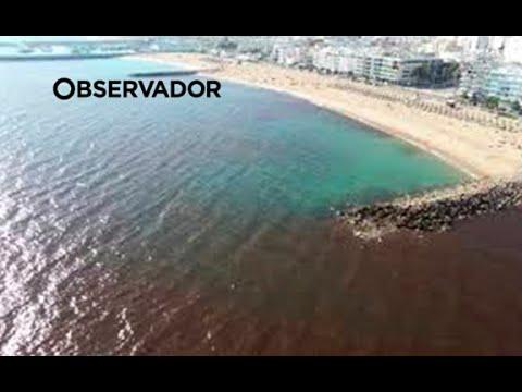 Las playas del Algarve, teñidas de negropor la alta densidad de algas tóxicas