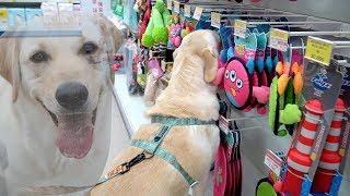 소녀가 갖고싶은거 다~사줬어요 🐥 강아지 쇼핑 thumbnail