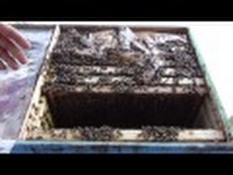 Expandarea familiilor de albine din Bio Stupi Apicultura la distanta Sfaturi apicultori incepatori