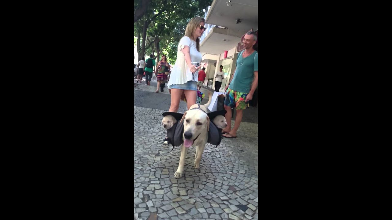 Lino walking with Puppies on backpack #Puppies #Puppie #Puppiedog ...