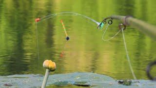 БОКОВОЙ КИВОК против ПОПЛАВКА рыбалка на боковой кивок и поплавочную удочку с берега