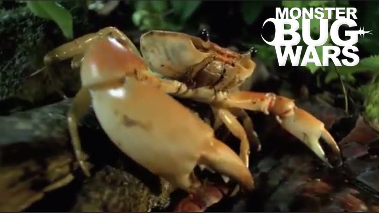 MONSTER BUG WARS | Crabs Getting Rekt Collection