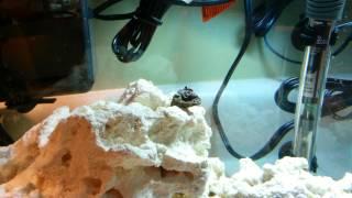 5 Gallon Nano Reef - Adding Corals