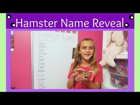 MY HAMSTER NAME REVEAL!!!