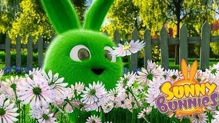 Cartoons for Children | SUNNY BUNNIES FLOWER PICKING | Funny Cartoons For Children