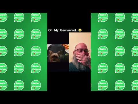 funny dog video lol