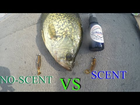 Scent VS No Scent Crappie Fishing CHALLENGE