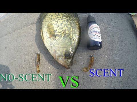 Scent VS No Scent Crappie Fishing CHALLENGE