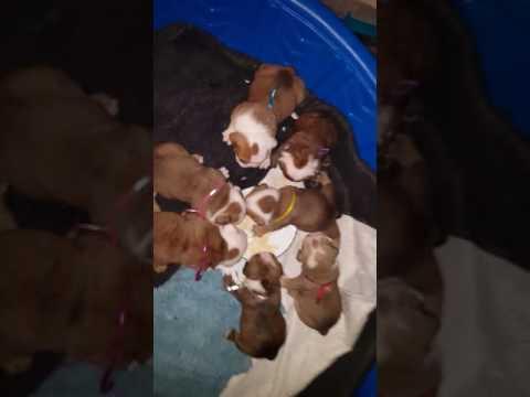 PuppyFinder.com : meal time