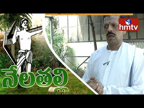 Hyderabad Ideal Farmer Ramdas Tips On Punganur Cow In Hyderabad | Nela Talli | hmtv
