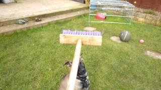 Police Dog Puppy Training