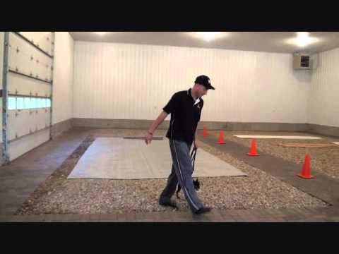 Prince (Miniature Pinscher) - Boot Camp Level II. Dog Training