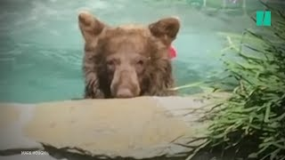 Bear Relaxes In A Jacuzzi With A Margarita (!)