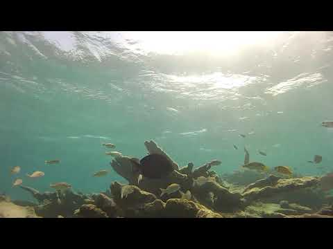 Snorkeling with Full Throttle Tours Aruba