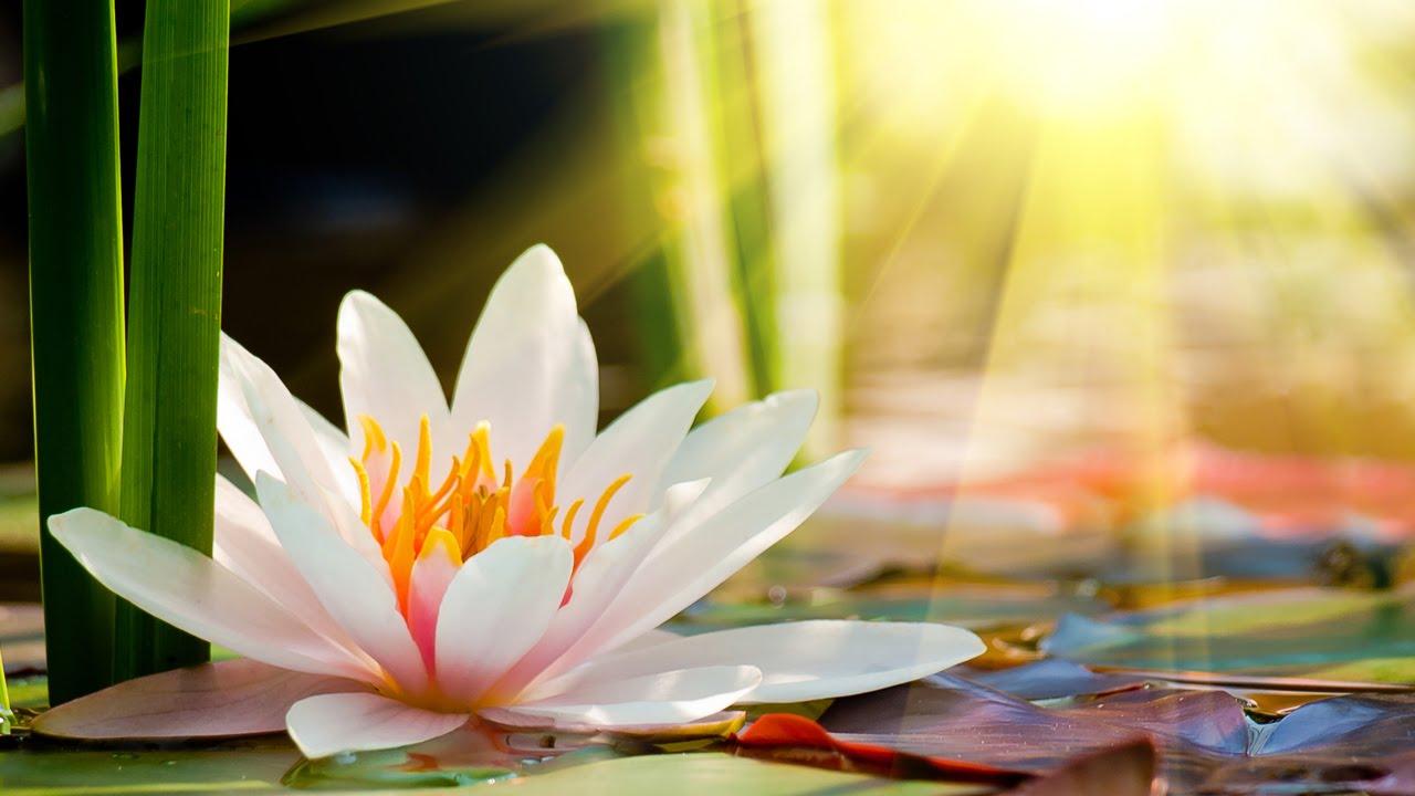 Relaxing Zen Music, Positive Energy Music, Relaxing Music ...