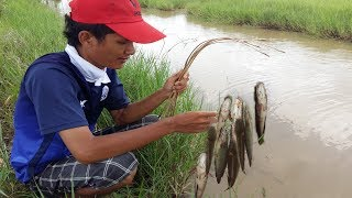 Wow ! Smart Man Make Easy Fishing Trap To Catch n Cook A Lot Of Fish in Rice Fields Cambodia