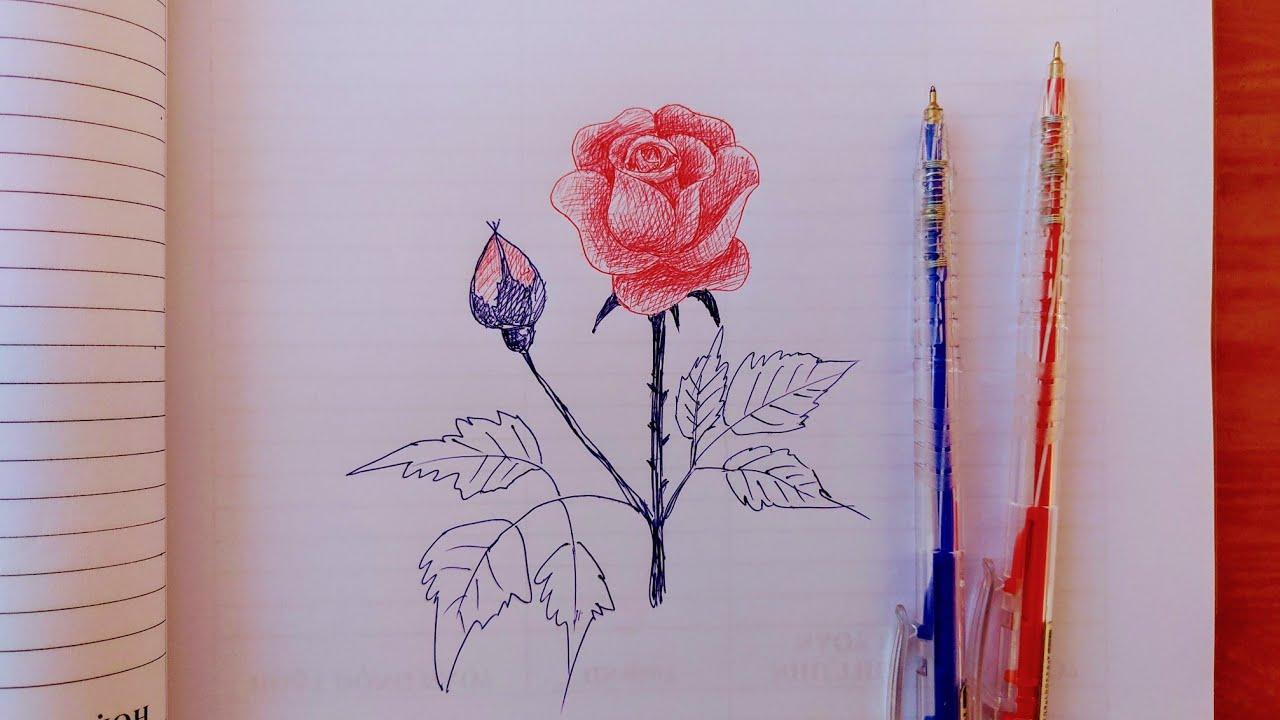 Vẽ hoa hồng bằng bút bi