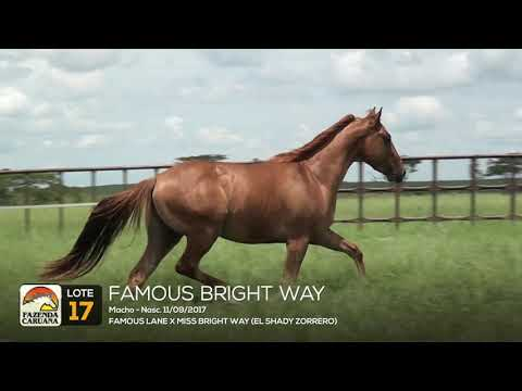 LOTE 17 - FAMOUS BRIGHT WAY