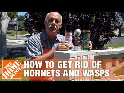 How To Get Rid Of Hornets And Wasps