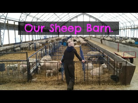 A tour of the sheep barn. |   Vlog 44