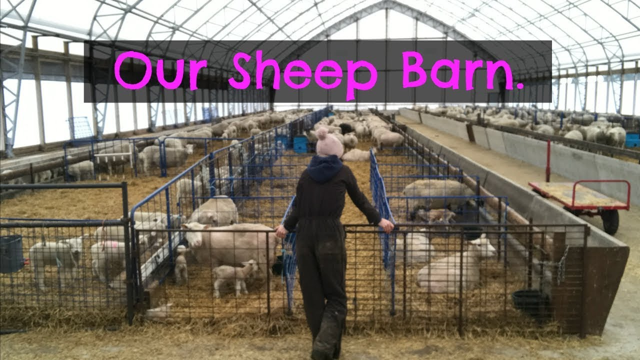 A Tour Of The Sheep Barn Vlog 44 Youtube