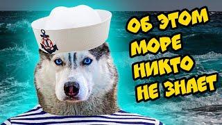 ПОЕЗДКА НА СЕКРЕТНОЕ МОРЕ!! (Хаски Бандит) Говорящая собака