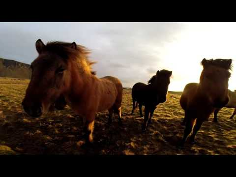 Iceland Project 2016 - Domel // Camel