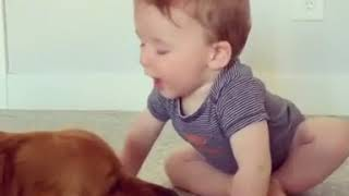 Golden Retriever Gives Laughing Baby Kisses - 1056012