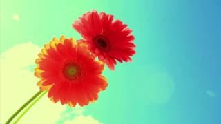 Musik Klasik untuk Ibu Hamil dan Untuk Bayi ♫ 02 - Stafaband