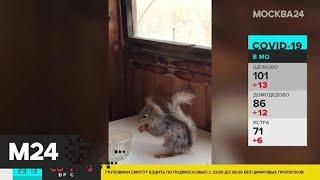 Нарушителей самоизоляции в Москве показали на видео - Москва 24