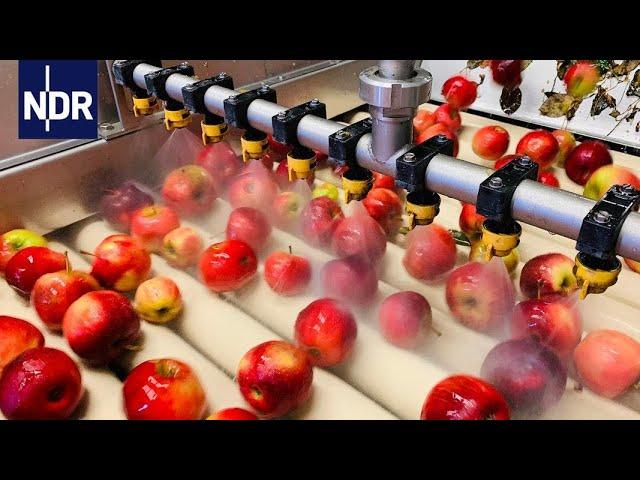 Fruchtsaft - Wie das Obst in die Flasche kommt | die nordreportage | NDR