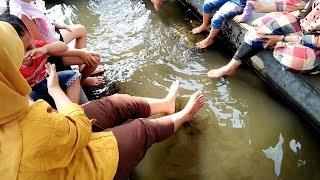 Video Lucunya Di Terapi Ikan Wa Neng Kegelian download MP3, 3GP, MP4, WEBM, AVI, FLV September 2018