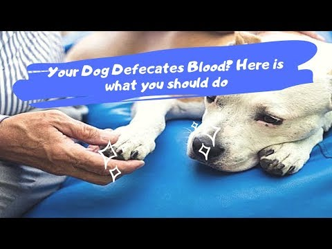 Your Dog Defecates Blood? Here Is What You Should Do