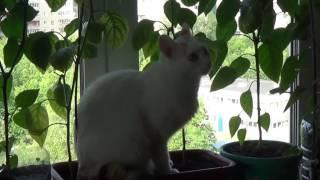 кошки охотятся на муху