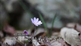 낮게 피는 봄꽃 노루귀,길마가지...[봄꽃 여행2]
