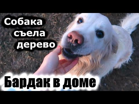 Собака съела дерево / БАРДАК в доме