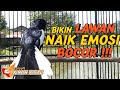 Pancingan Kacer Poci Super Gacor Bikin Lawan Naik Emosi Bocor  Mp3 - Mp4 Download