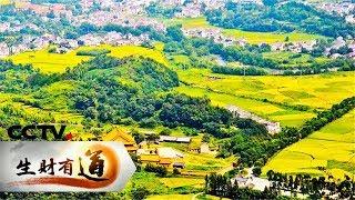 《生财有道》 20190514 美味中国系列 安徽青阳:山水蕴美味 美味寄乡愁| CCTV财经