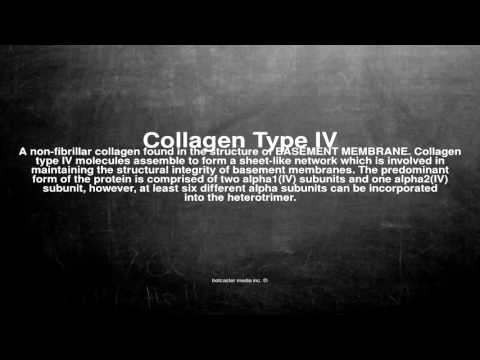Medical vocabulary: What does Collagen Type IV mean