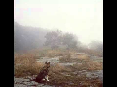 Alek Fin - Waiting Like A Wolf (Robot Koch...