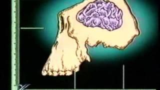 видео Антропогенез человека - факторы, стадии, теория антропогенеза