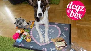 Jubiläums-DogzBox // Premiumbox // 4.Geburtstag // #unboxing