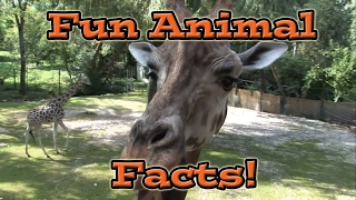 Fun Animal Facts for Kids
