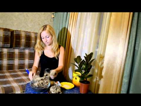 Рекомендации по использованию мха сфагнума для посадки растений .
