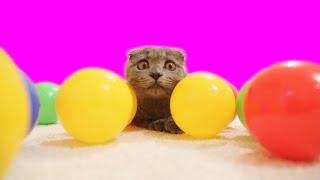 Развлечения кошечек Джессики и Зефирки с шариками для сухого бассейна