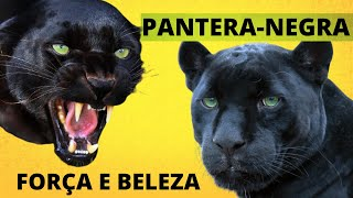 PANTERA NEGRA! FORCA, CORAGEM E AGILIDADE! UM VERDADEIRO HEROI DA NATUREZA!!! Black Panthe ...