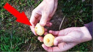 ВСЯ РЫБА ОДУРЕЛА ОТ ЭТОГО СЕТЯМИ СТОЛЬКО НЕ ЛОВЯТ Реакция рыбы на кокосовое печенье кокосанки