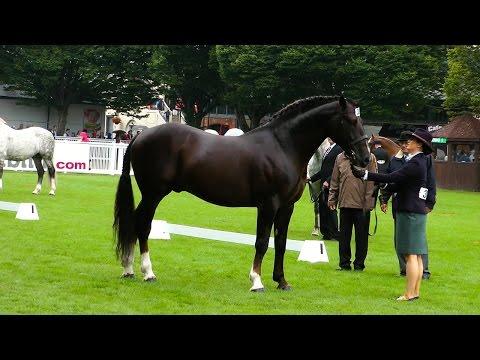 Dublin Horse Show RID Stallion Class RDS 2015